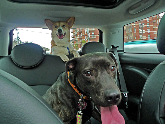 Emmy would not be confined to the trunk, and Rory was just too small to get out.